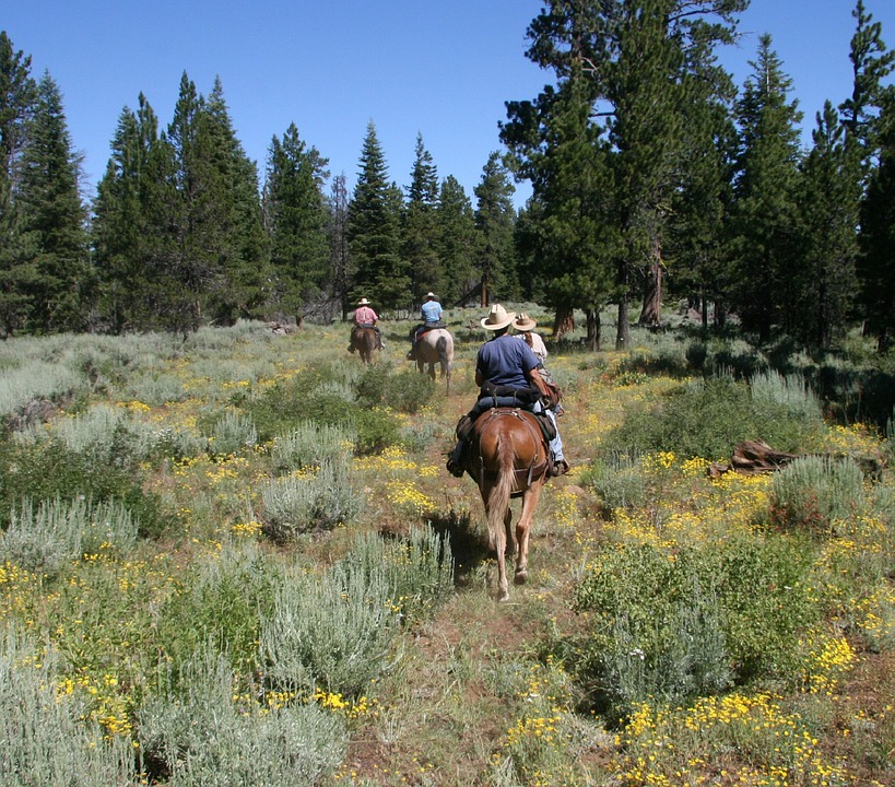 Horse Trail Rides Should Be Your Next Vacationing Plan