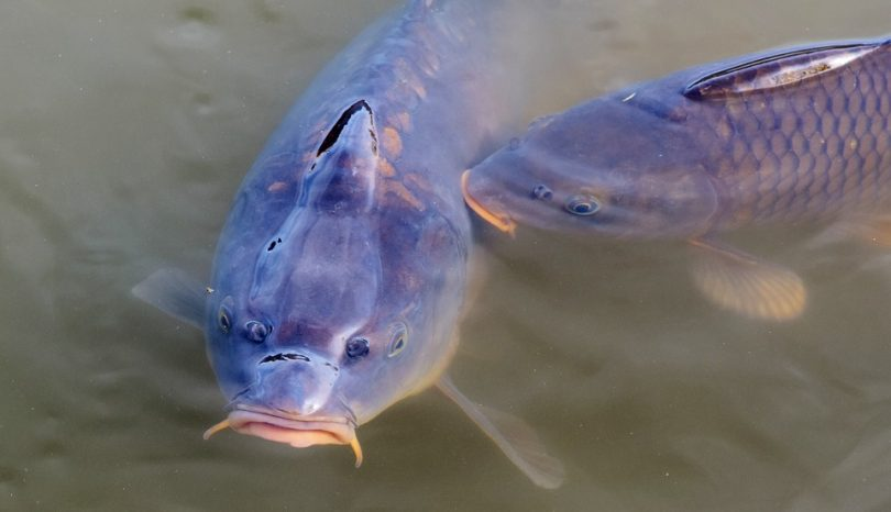 How To Get Into Carp Fishing: A Beginner's Guide