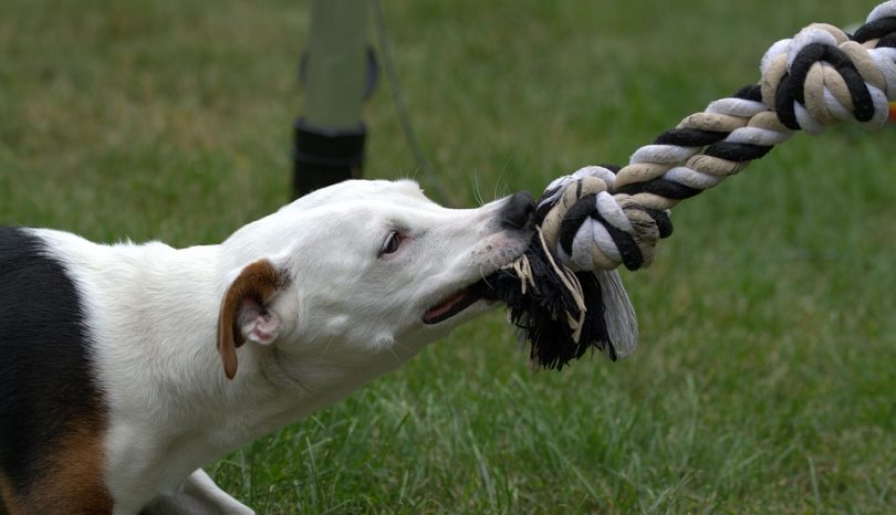 Basics About Dog Bite Lawsuits