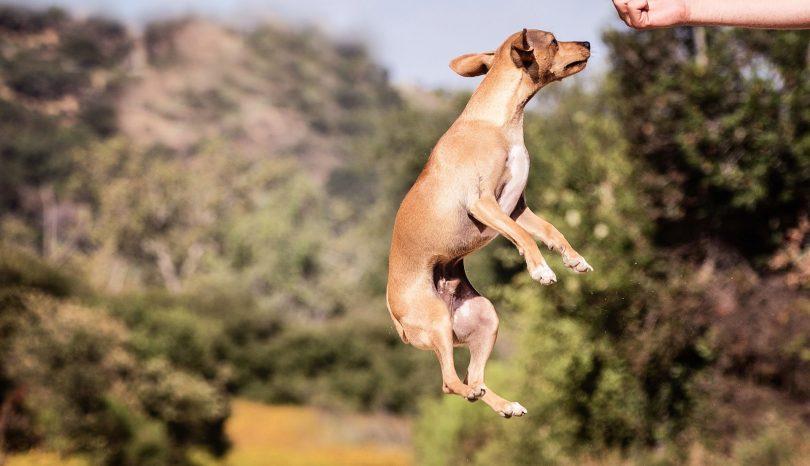 Healthy Natural Dog Treats Ideas