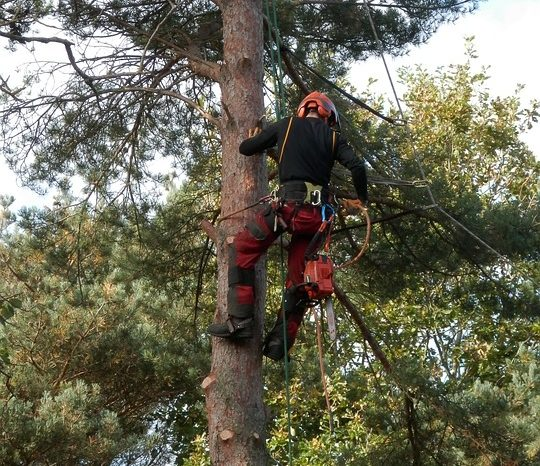 Treatment Offered By Tree Surgeon Berkshire