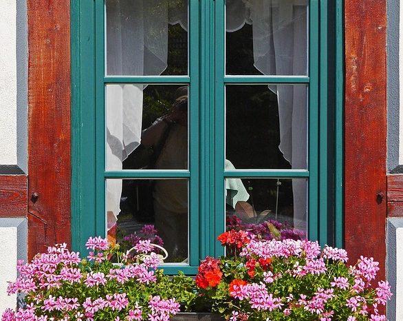 Factors That People Overlook Before Decorating Balconies With Plants