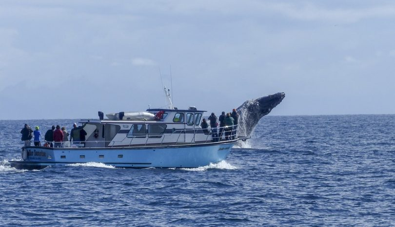 A Beginners Guide On How To Get Ready For Whale Watching Tours